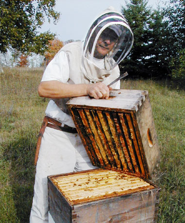 Tom Morrisey, the beekeeper, checking his hives.